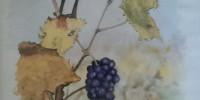 La grappe de raisins